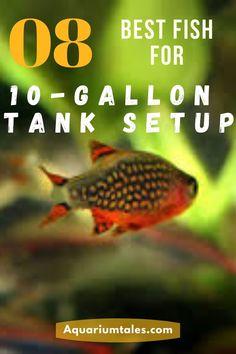 Aquarium Heater, Aquarium Setup, Aquarium Design, Planted Aquarium, Aquarium Fish, Cory Catfish, Biotope Aquarium, Neon Tetra, Freshwater Aquarium