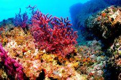 Resultado de imagen de arrecifes marinos fotos