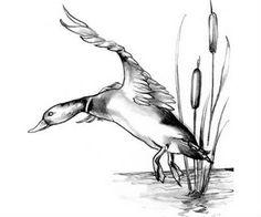 Duck Tattoo Design Sketch Coloring Page Duck Hunting Tattoos, Duck Tattoos, Cool Tattoos, Hunting Drawings, Bird Tattoos, Wood Burning Stencils, Wood Burning Patterns, Wood Burning Art, Bird Drawings