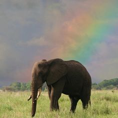 A dramatic rainbow appears behind an elephant in the Tarangire Game Reserve, Tanzania, Africa.