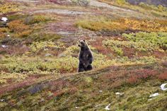 USA, Alaska image gallery - Lonely Planet