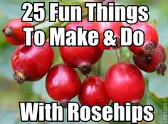 25 Fun Things To Make and Do With Rosehips  http://wildcraftvita.blogspot.co.uk/2012/10/rosehip-collection-25-things-to-do-with.html?m=1