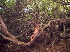 #National #Park #Shete #Boka #Beautiful #Tree #Curaçao