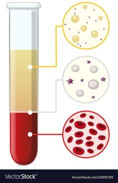 Blood cells in test tube vector image on VectorStock Biology Poster, Biology Art, Cell Biology, Blood Donation Posters, Medical Clip Art, Doctor Drawing, School Border, Illustration Inspiration, School Frame