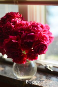 On my windowsill this afternoon : cut Don Juan roses from my garden.