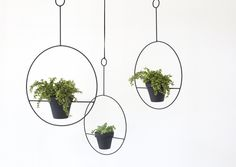Sonadora-CIRCLE-PLANT-HOLDER-gardenista-obsessions.jpg 733 × 519 pixels