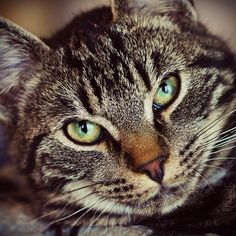 Awesome  cat   Why yes, I guess I am. by TanjaMaria