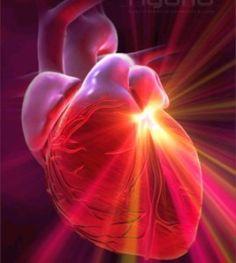 L'amour et le coeur - il semble que le cœur puisse prendre des décisions et passer à l'action indépendamment du cerveau et qu'il puisse apprendre, se souvenir et même percevoir. Il existe quatre types de connexions qui partent du cœur et vont vers le cerveau de la tête. le champ électromagnétique du cœur est le plus puissant de tous les organes du corps, 5.000 fois plus intense que celui du cerveau. Et on a observé qu'il varie en fonction de l'état émotif.