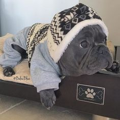 French Bulldog Puppy in a Onesie:                                                                                                                                                                                 More