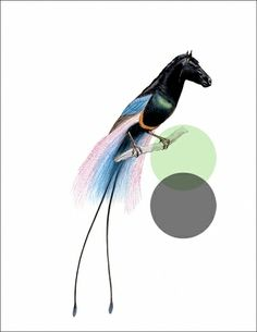 Odd Animals : - tor weeks - director of art