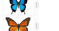 Schmetterlingspuzzle.pdf - Google Drive