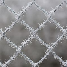 nakamagome2:    frosty spikes (via iPhotograph)