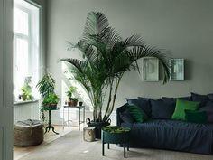 Grönt är skönt Det tycker i alla fall vi på #houzzse! Att inreda med växter ger inte bara en harmonisk och naturnära känsla hemma men är även bra för hälsan. En Guldpalm rengör exempelvis luften och tillsätter massa fukt Har ni växter hemma? @alcrotrend