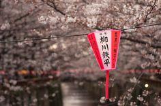 Cherry blossom Japan - Epenyata dan Epenyata Gaji http://epenyata-gaji.com/