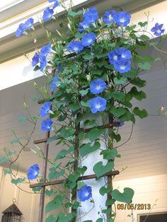 Algodão Tão Doce: Flores