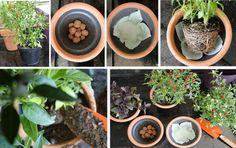 Como plantar no vaso   Diário da Micha