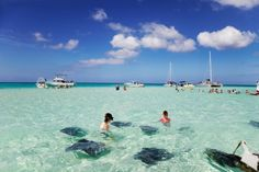 Cayman Islands, I loved swimming with the betrays.