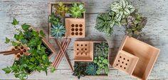 Natural Timber Flower Pots : wooden flower pot