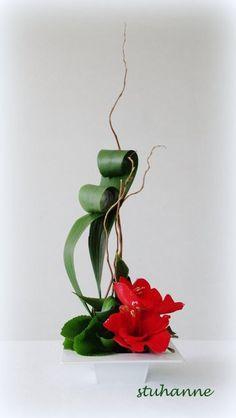 avec les derniers fleurons d amaryllis