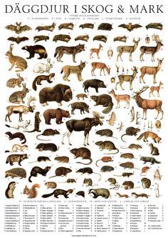 Däggdjur i skog och mark - poster plansch