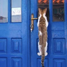 Where there's a will, there's a way! #cats