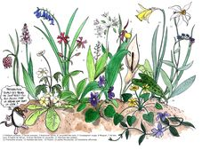 Préserve les fleurs sauvages en les observant dans la Nature. http://www.bourgogne-nature.fr/fr/coin-junior/les-12-travaux-de-neomys_5_actu_58.html