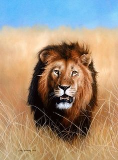 Sarah Stribbling Wildlife Art | Gallery