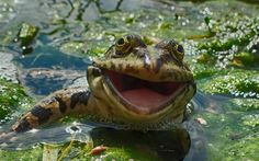 A frog appears to have a big smile for the camera in Russia