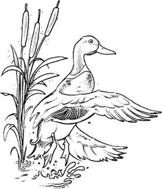 Mallard L-72 : Rubber Art-Stamps : Decorative Rubber Stamps : The Stampin' Place