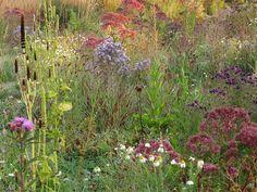 oudolf wild garden by piet oudolf, via Flickr