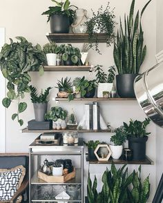 A new Pasadena boutique is dedicated to nothing but indoor house plants Plant Decor, Plant Wall, Sweet Home, Room Decor, Decor, Room With Plants, Plant Shelves, Home And Garden, Home Decor