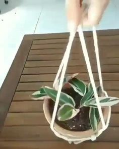 House Plants Decor, Plant Decor, Easy House Plants, Macrame Plant Hangers, Diy Hanging Planter Macrame, Hanging Plant Diy, Macrame Plant Hanger Patterns, Hanging Jars, Macrame Plant Holder