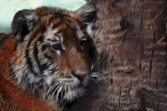Bengal Tiger Cub Fractalius