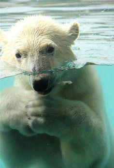 Underwater Shyness!