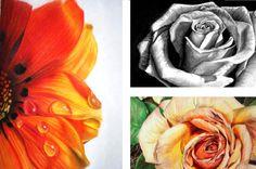 dibujos de flores con carboncillo , lleso seco , y acuarelas