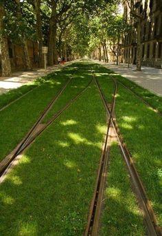 Grass tram tracks