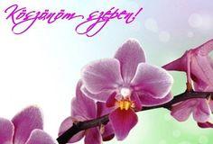 Betty Boop, Emoji, Happy Birthday, Floral, Flowers, Plants, Google, Acre, Happy Brithday
