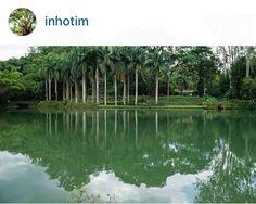 O Jardin Botânico Inhotim, Guarda uma das maiores coleções de palmeiras do mundo.