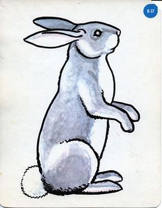 illustration; rabbit