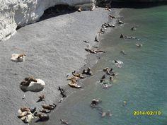 Punta Loma. Reserva de lobos marinos. Puerto Madryn, Argentina.