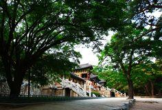 지상에 내려온 부처의 나라, 한국의 대표 불교사찰 '불국사'