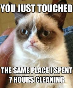 The Best Of The Grumpy Cat Meme