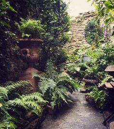 Ask the Expert: Design Tips for a Shady Courtyard Garden