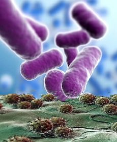 Montagem que criei para mostrar bactérias e vírus