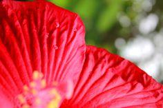 drops of red by Danielle Andrew http://whurrledpeas.deviantart.com/