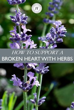 How To Support A Broken Heart With Herbs | Herbal Academy | Support a broken heart with these herbs that calm, uplift, and nourish the body!