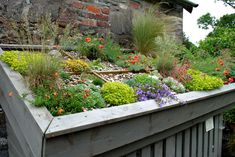 Green roof on garden shed Back Gardens, Outdoor Gardens, Pasto Natural, Roof Plants, Sedum Roof, Green Roof System, Living Roofs, Rooftop Garden, Small Garden Design
