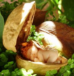 Miniature Fairy Baby in Walnut Shell by TeensyWeensyBaby on Etsy