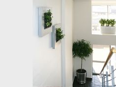 For many, it is a no brainer that using indoor plants have obvious benefits to the indoor environment.