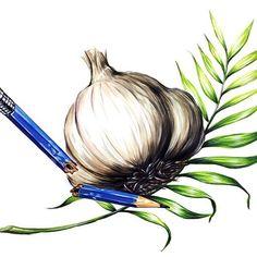상명대 기초디자인 제시물, 기초디자인, 마늘, 연필, 나뭇잎, 개체표현, 개체묘사